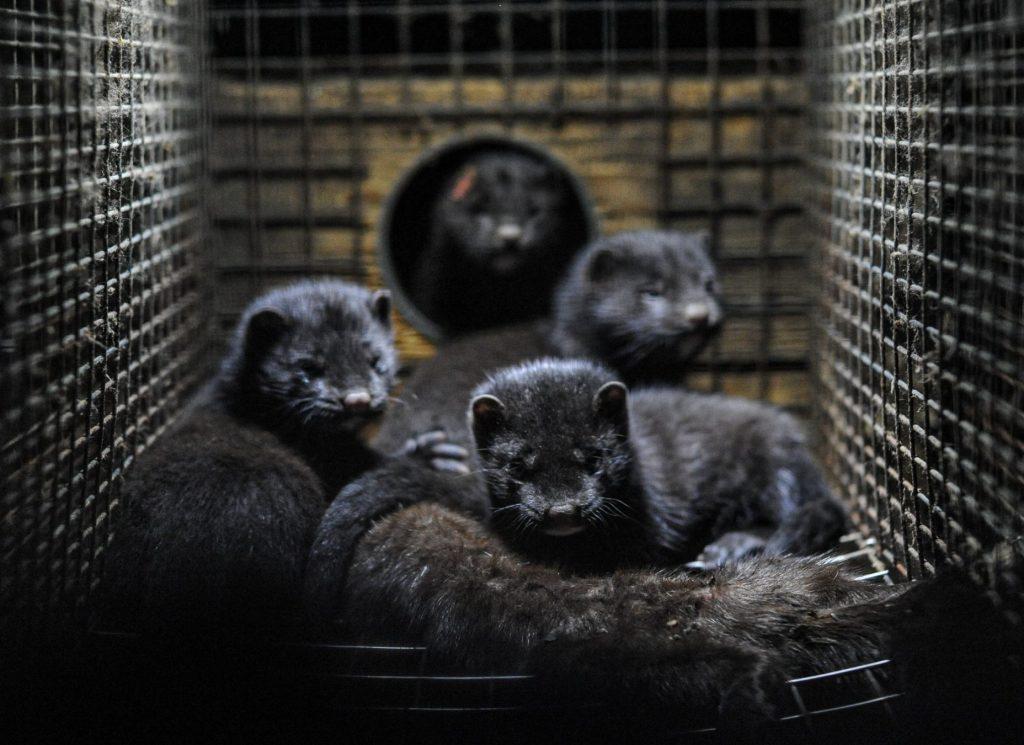 mink (Foto: Unsplash)