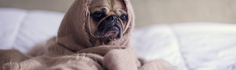 hund, hygge, trist (Foto: Unsplash)