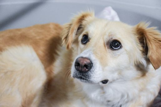 hund kæledyr T Foto: Dyrenes Beskyttelse