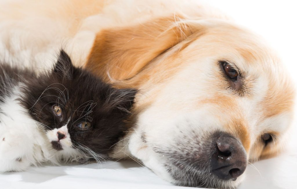 hund kat kæledyr (Foto: Topdanmark)