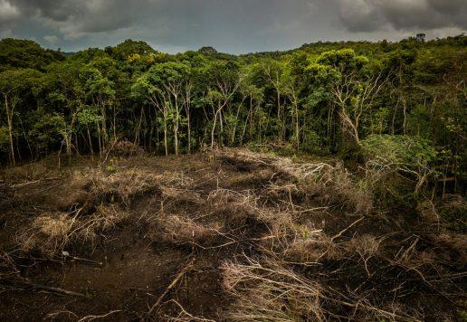 amazonas skov wwf