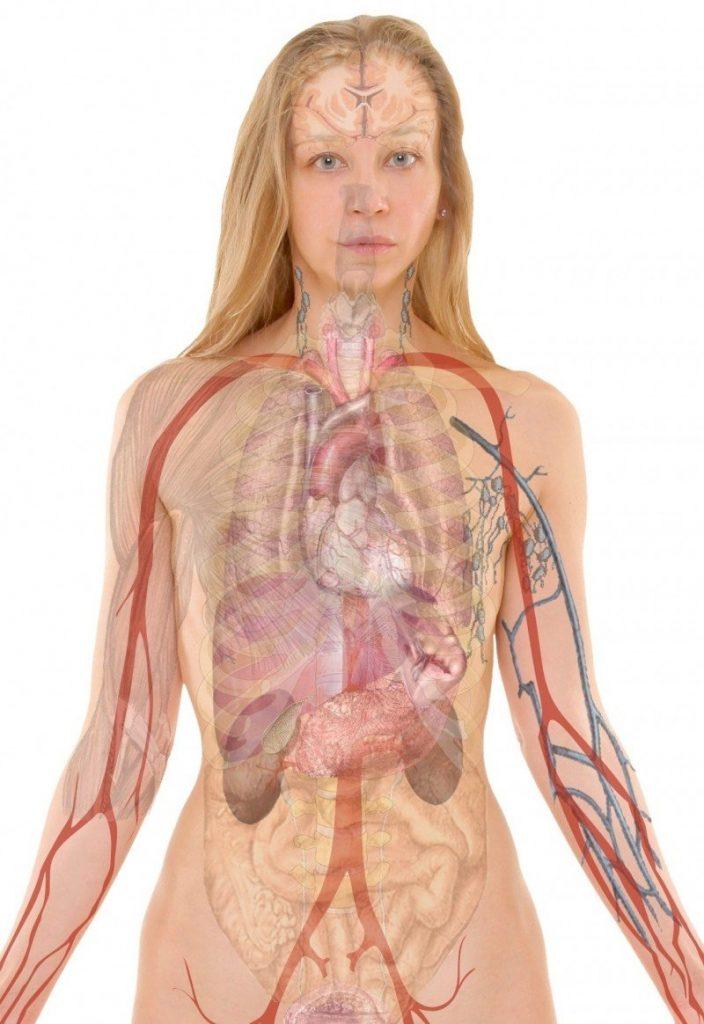 pige anatomi krop (Foto: Unsplash)