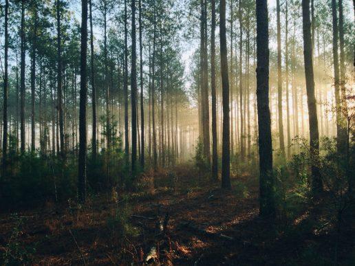skov træ træer natur (Foto: Unsplash)
