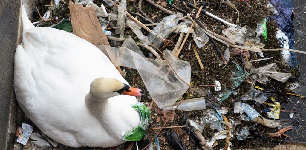 svane plastikforurening natur gubra plastic change (Foto: PR)