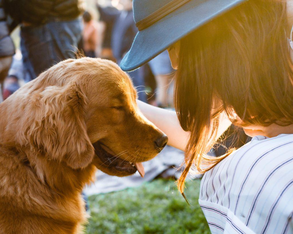 hund pige kæledyr venner (Foto: Unsplash)