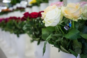 roser fairtraide