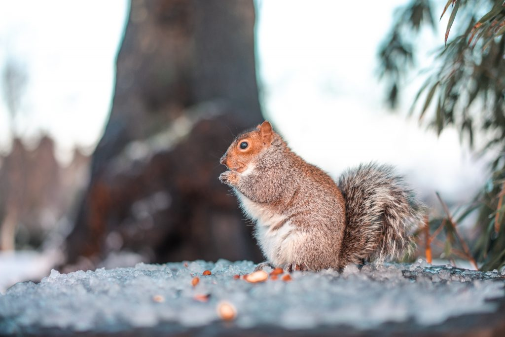 egern natur dyr (Foto: Unsplash)