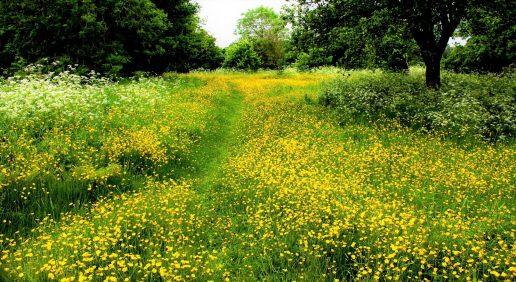 have natur biodiversitet