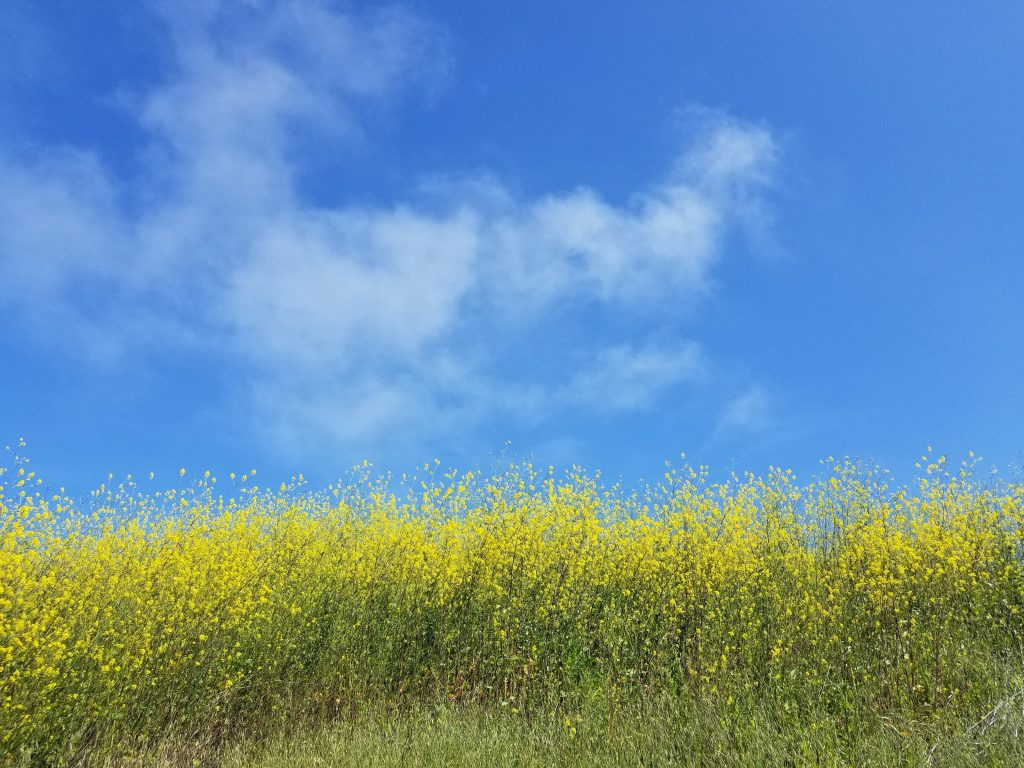 sennepsmark himmel sky natur danmark (Foto: Unsplash)