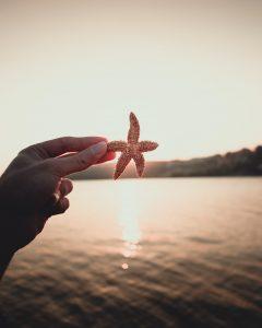 hånd havet sø søstjerne (Foto: Unspash)
