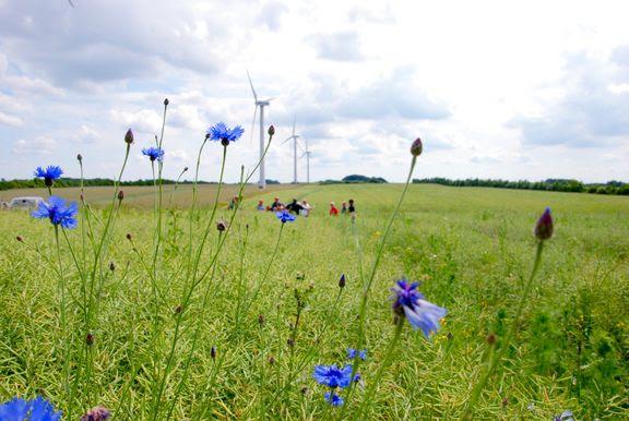 mark økologi natur kornblomster