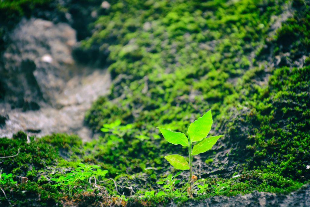 natur miljø