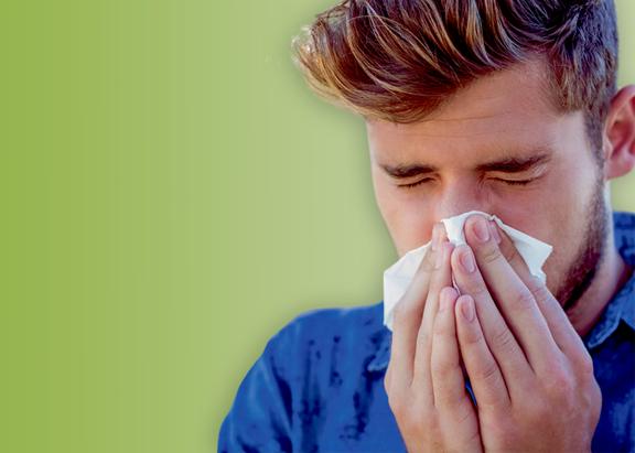 høfeber allergi