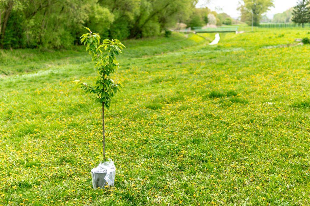 plante træ natur