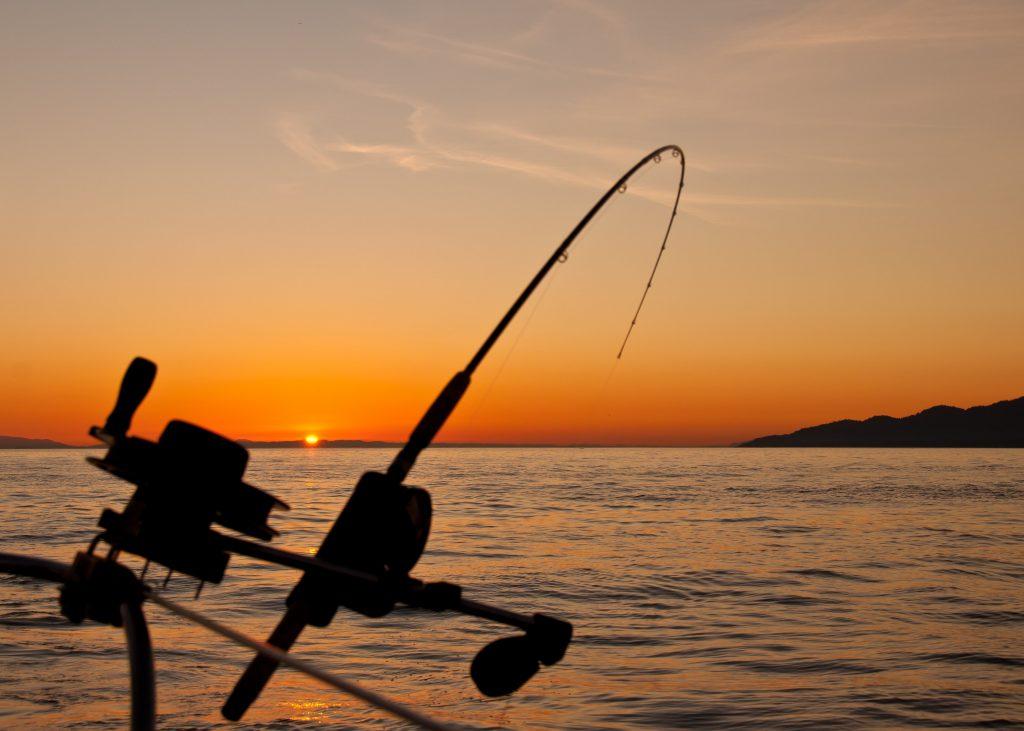 fisk fiskeri
