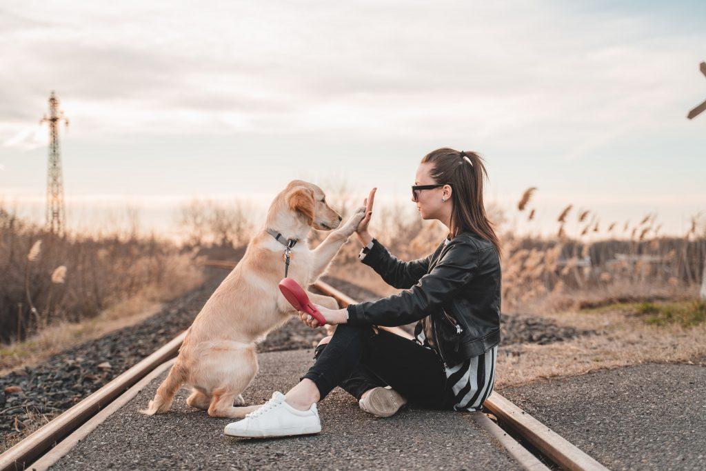 hund kæledyr (Foto: Unsplash)