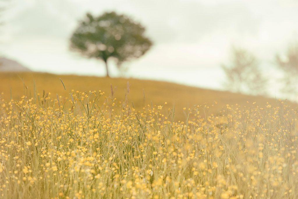 mark blomster træ natur
