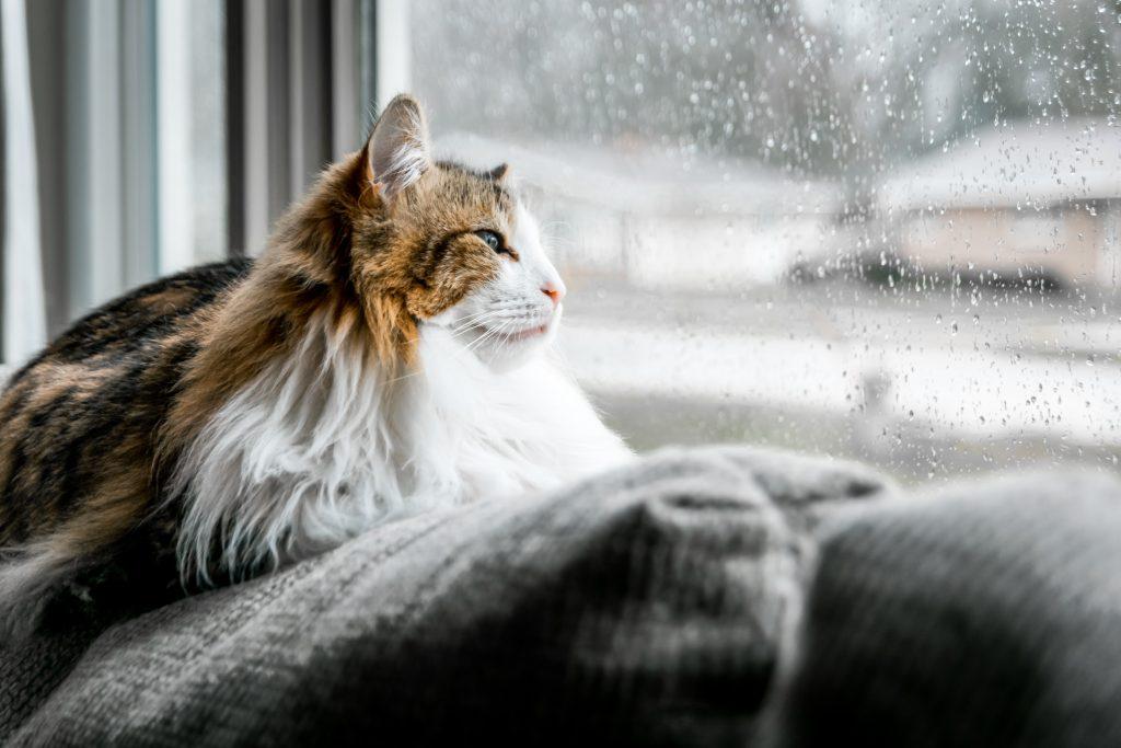 kat regn regnvejr