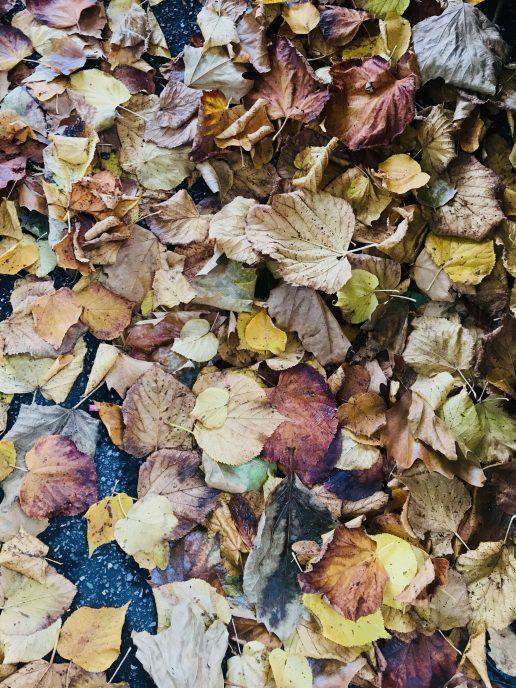 efterår blade løv