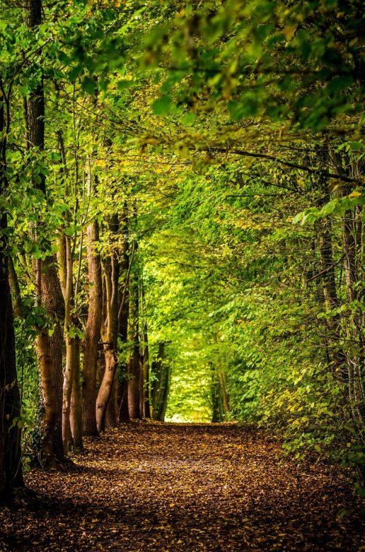 skov træer
