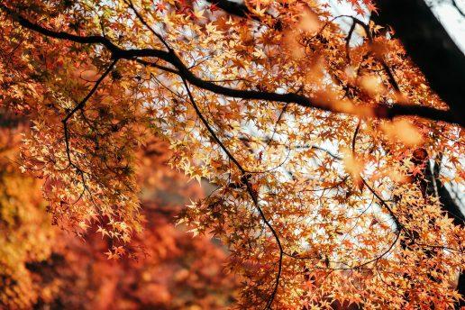 efterår blade