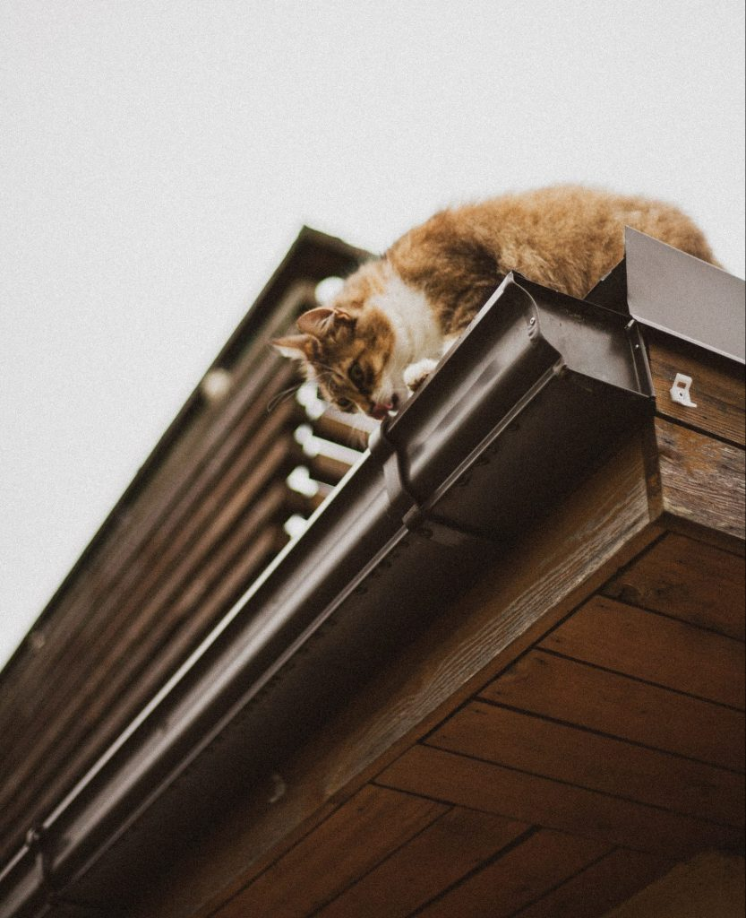 kat tagrende